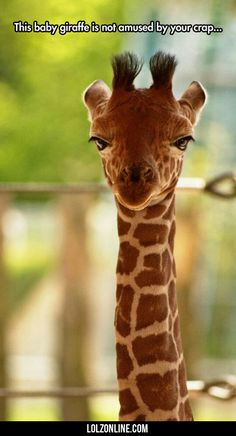 Ha ha baby giraff and grumpy cat should go hang out and why is there not a grumpy cat emoji when I'm talking about grumpy cat I don't want to use two emojis