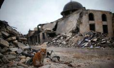 Syria cats