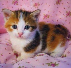 (77) Cat's Album - Photos du journal