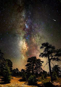 Deep space, deep in the forest.. Troodos Mountains, Cyprus (by CostaDinos on Flickr)