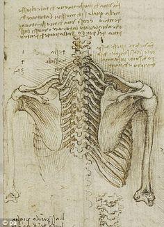 Shoulder blades and backbone  Di Vinci anatomy study