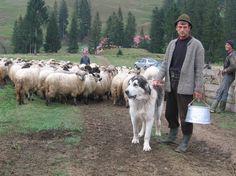 13 alte legi pentru ciobani ce urmează să fie votate