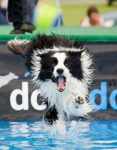 Crazy Dock Dogs