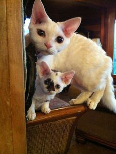 Big eyes. Mother and baby, so cute.