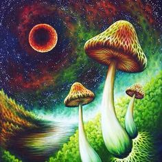 #fractal #fractalarte #sacredart #divine #iluminati #lightworker #sacrednature #fibonacci #creation #universe #tattoo #sacredpattern  #sacredgeometry #positivevibes #energy #esoteric  #connection #secret #unity #onelove #pinealeye #mandala #dope #trippy #thirdeye #deepdream #love #union by energyisgod