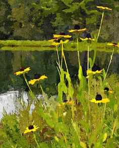 Pond Flowers Print Collection: Fifteen different downloadable digital paintings for your wall decor by Don Berg