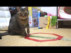 Munchkin tested CatCircles