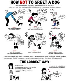 How To Greet A Dog...Correctly!