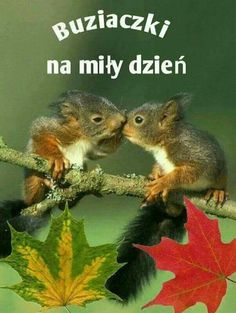 Good Morning Funny, Dory, Motto, Haha, Thoughts, Pictures, Animals, Life, Squirrels