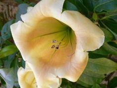 gratis skrivbordsunderlägg - Tropiska blommor: http://wallpapic.se/naturen/tropiska-blommor/wallpaper-10109