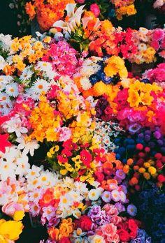 To add to my flower garden one day Flower Power, My Flower, Flower Bomb, Wild Flowers, Beautiful Flowers, Colorful Flowers, Rainbow Flowers, Fresh Flowers, Spring Flowers