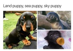 """Cute baby animals - miracufic """" neverparted """" """" but everything changed when the fire puppy attacked """" Cute Animal Memes, Animal Jokes, Funny Animal Pictures, Cute Funny Animals, Funny Cute, Funny Pics, Cute Puppies, Cute Dogs, Cute Babies"""