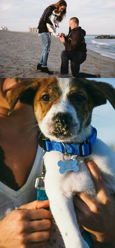 This puppy helped pull off the cutest beach proposal! Cute Proposal Ideas, Beach Proposal, Proposal Photos, Perfect Proposal, Engagement Photo Poses, Engagement Photo Inspiration, Engagement Pictures, Engagement Party Favors, How We Met