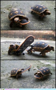 Your tiny turtles of the day. You are welcome.