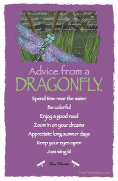 Advice From A Dragonfly                                                                                                                                                                                 More