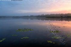 Sumuinen aamu järvellä - ulpukka kaunis rauha rauhallinen kukka vihreä järvi aamu kasvi heijastus taivas pilvi kesä vesi