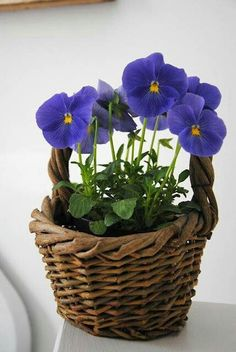 Pansies in a basket. Looks nice on a patio table.