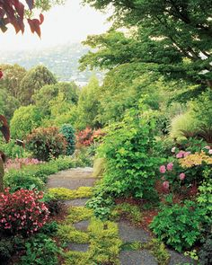 Contrast & Size Dictate This Garden:  To avoid blocking the harbor view, the designer chose small to mid-size plantings for this upper hillside slope - primarily viburnums, begonias, and hydrangeas - since the view looks down through trees, it was important to not add any trees or shrubs that would grow too tall - small Japanese maples, which are kept well-pruned, have proved ideal - while Gold Acorus  gramineus 'Ogon' sprouts between the stepping stones of the curving pathway...