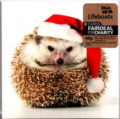 Pack of 8 Mini Happy Hedgehog RNLI Lifeboats Charity Christmas Cards Xmas Card P for sale Charity Christmas Cards, Christmas Card Packs, Personalised Christmas Cards, Xmas Cards, Merry Christmas, Christmas Time, Greeting Cards, Happy Hedgehog, Hedgehog Pet