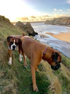 Boys poised on cliff edge path in the bright sunshine today 27/12/17