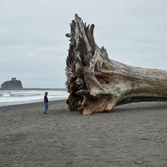 La Push Washington, Beached Tree...camped here 4th of July a few years ago, would love to go back.