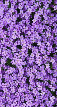 Machen Sie gefälschte Felsen mit Beton In February you can already prepare soil and beds, clean out dead parts of early bloomers and perennials and sow the first summer flowers. You can find out in our garden tips which other gardening activities in the Aesthetic Drawing, Flower Aesthetic, Purple Aesthetic, Aesthetic Vintage, Lavender Aesthetic, Aesthetic Style, Wallpaper Tumblrs, Wallpaper Backgrounds, Iphone Backgrounds