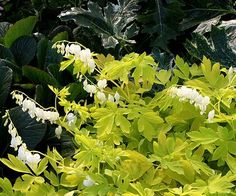 <p>We've sought out the latest must-have perennial varieties you won't want to miss in 2016.</p>