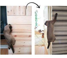 46 besten katzen kletterwand bilder auf pinterest in 2018 cat supplies cat playground und dog cat. Black Bedroom Furniture Sets. Home Design Ideas