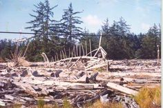 Driftwood Sculptures - North of North Bend, OR, Southern Oregon Coast, North Bend, Driftwood Sculpture, 1970s, Sculptures, Fair Grounds, Sweet, Travel, Candy