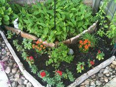 Shade Garden Ideas Zone 9 spring/summer blooming perennial for the shade garden, zone 9