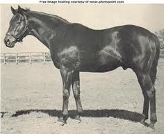 War Admiral (1934–1959) American thoroughbred racehorse, the offspring of Man o' War and Brushup. War Admiral was born at Faraway Farm in Lexington, Kentucky, and was owned by Samuel D. Riddle. After 1936, his regular jockey until retirement was Charles Kurtsinger. War Admiral won 21 of his 26 starts, including the Pimlico Special and the U.S. Triple Crown in 1937. In a poll organised by Turf & Sport Digest magazine, he was voted Horse of the Year, beating Seabiscuit by 621 votes to 603.