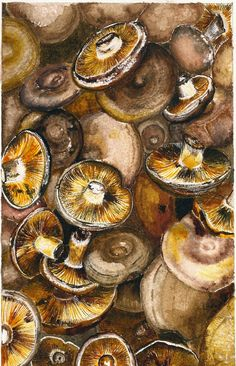 deep fried, in spaghetti.grammie loved them! Magnesium Foods, High Potassium Foods, Nature Sketches Pencil, Diabetic Living, Mushroom Fungi, Patterns In Nature, Natural Forms, Kitchen Essentials, Food For Thought