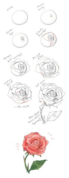 how to draw a rose guide - Drawing flowers on large boards or walls can be intimidating for beginners. Here is a good way to learn how to draw a rose by starting with a circle. #learnhowtodraw #drawings #howtodraw #howtodrawrose #howtodrawflowers
