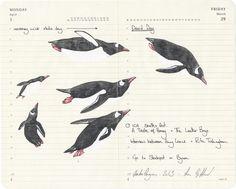 Gentoo Penguins . Graphite Pencil and Aquarelle over Moleskine Paper . 21cm by 25cm . 2013    #aparliamentofdrawings