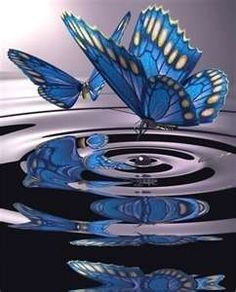 Even something as small and fragile as a butterfly can create a ripple effect.