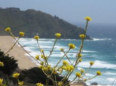 This time of year, after multiple rains, is the best time to enjoy the wildflowers blooming along coastal Monterey and Big Sur. Photo: Koleen Hamblin / SF