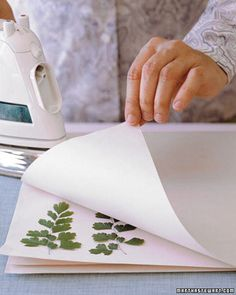Send spring notes or invitations on cards decorated with dainty ferns and flowers. Select thin, delicate cuttings because they dry easily; we used maidenhair fern, goldenrod, and hydrangea.