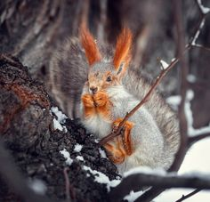 ...moderately evil Squirrel.