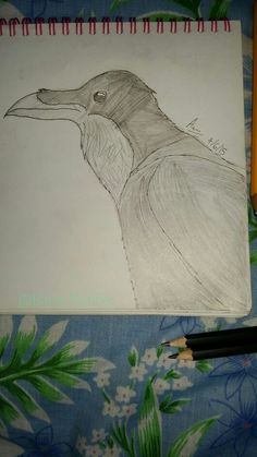 Raven. #30doodles Repin with credit. Drawn by Blaze Runner ( Alphaheart ).