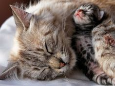 Kuscheln um die Wette: Zehn zauberhafte Katzenumarmungen - Seite 10