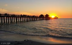 I've spent countless hours here ❤️ Miss Florida, Florida Travel, Travel Usa, Naples Pier, Naples Florida, Marco Island, Places To Travel, Places To See, Places In Florida