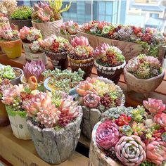 26 Finest Delicious Garden Ideas All Over The World #succulentgardendish #succulentgardenoutdoor #succulentgardennearme #succulentgardensnearme #succulentgardendelivery Succulents In Containers, Cacti And Succulents, Planting Succulents, Planting Flowers, Propagate Succulents, Succulent Gardening, Succulent Terrarium, Container Gardening, Terrariums