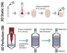 disposable perfusion bioreactor - Google Search