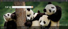 Des Pandas en image de fond sur Bing, ça fait rire (ou pas) les SEO