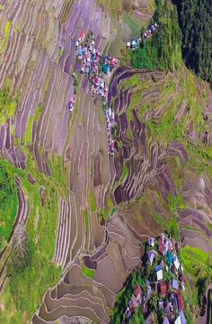 The Batad rice terraces belong to the UNESCO World Heritage Site 'Rice Terraces of the Philippine Cordilleras'. This site is located in the Philippines. Rice Terraces, Cheap Web Hosting, Philippines