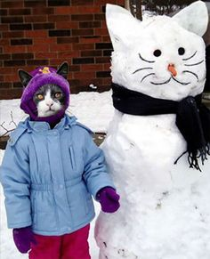 Although the kitty in this photo is obviously Photoshopped in. This is adorable and if it ever snows here again doug and I are so making a kitty snowman! Silly Cats, Cats And Kittens, Funny Cats, Cool Cats, I Love Cats, Crazy Cat Lady, Crazy Cats, Gatos Cool, Funny Snowman