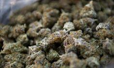Is medical marijuana the answer to America's prescription painkiller epidemic?