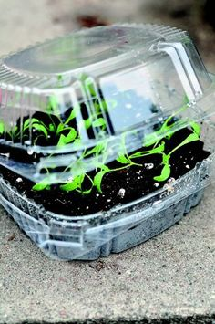 Turn a to-go container into a mini-greenhouse for starting seedlings. Photo: Gayla Trail, Easy Growing