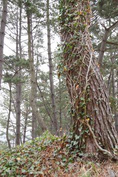천리포 수목원 Chollipo Arboretum    외국인 민병갈님이 심혈을 기울여 만들었다고 하는군요..멋진 장소입니다...1만4000여종의 수목이 있다고 하는군요...    천리포 수목원  http://www.chollipo.org/gnu/chollipo.html  페이스북   http://www.facebook.com/CLPArboretum  민병갈원장 동영상  http://youtu.be/JcZ5kV8mhXE    우리들한의원 무료앱 다운법 사상체질진단가능 free app. sasang diagnosis program.  http://www.iwooridul.com/app-update