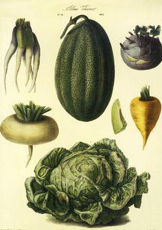 vintage vegetable - Pesquisa Google